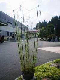 2009925_5