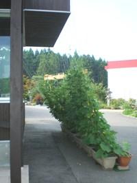2010726_4