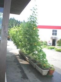 201082_4