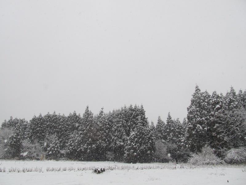 2011311_5