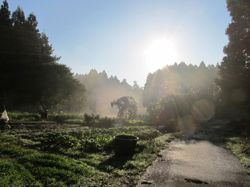 20111117_3